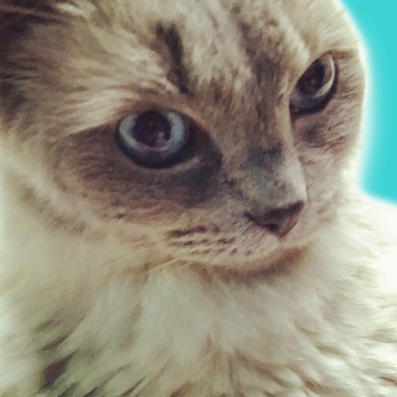 cat2, tracker