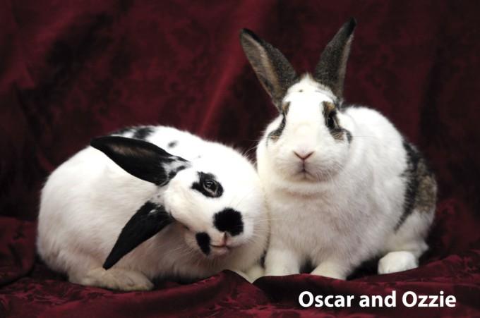Oscar_Ozzie_14-099-1024x680