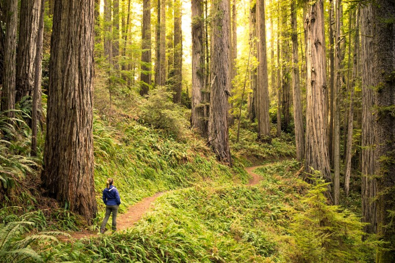 redwood natl state park