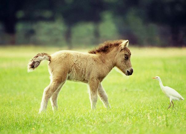 Image Gallery teacup horses