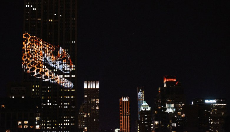 empire-state-projection-endangered-animals-nyc-35