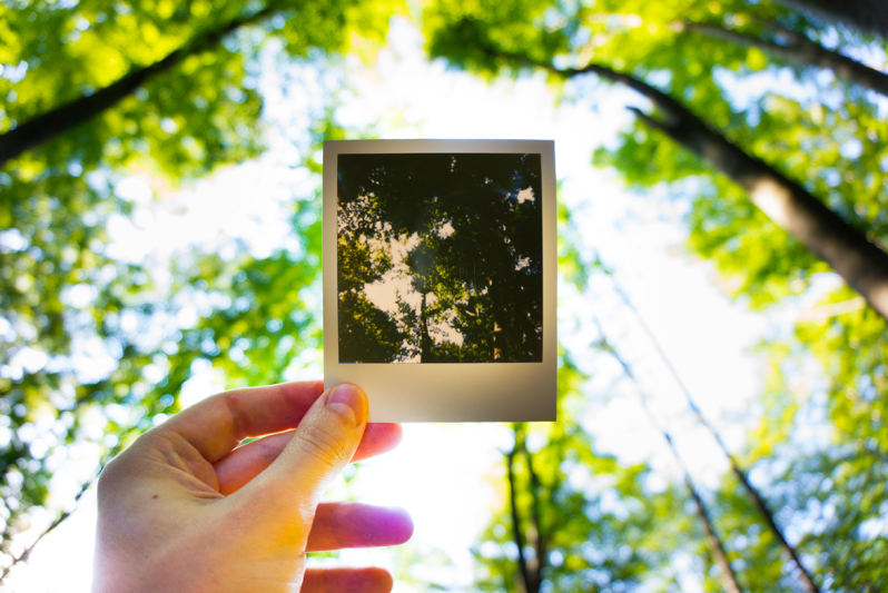 Hand holding a polaroid picture of trees with trees in background