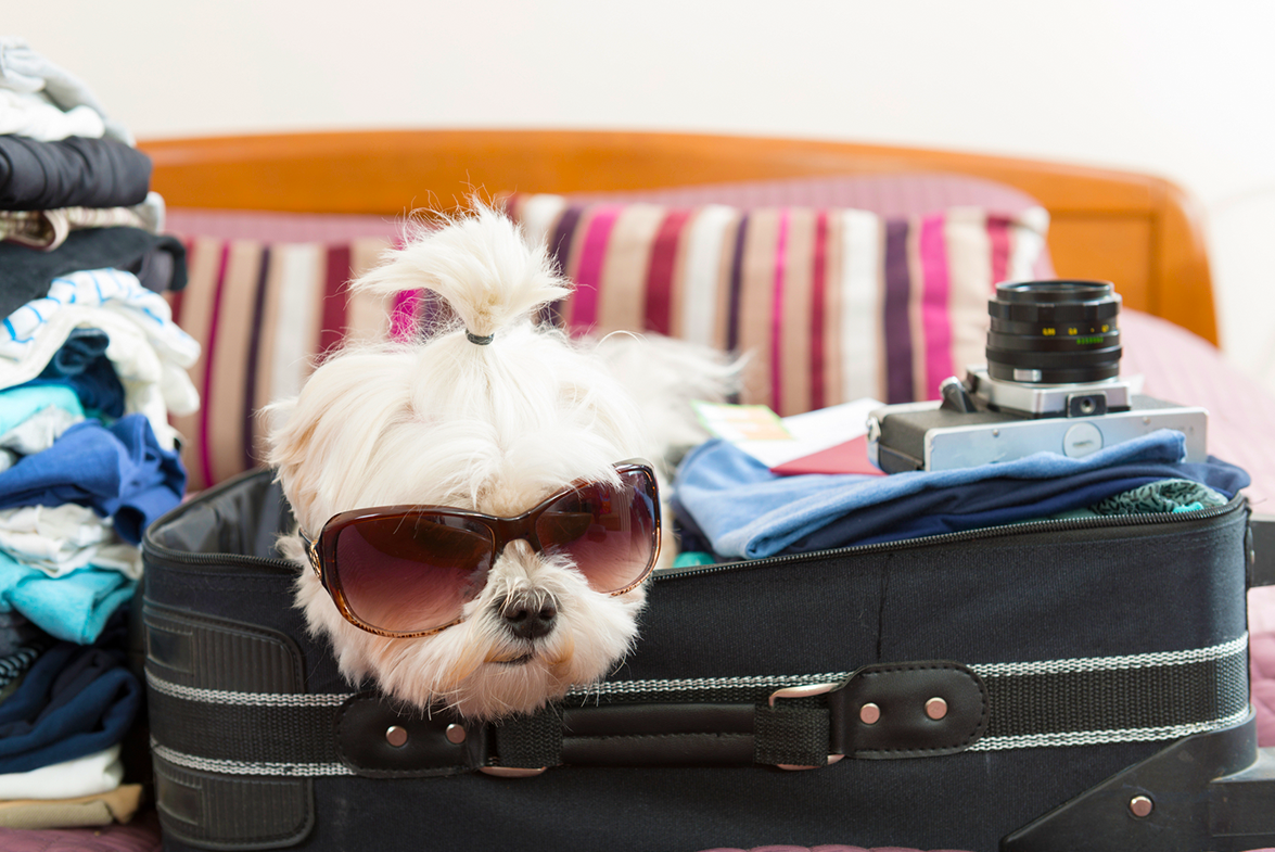 How to Pack for the Perfect Road Trip: The Only List You'll Need