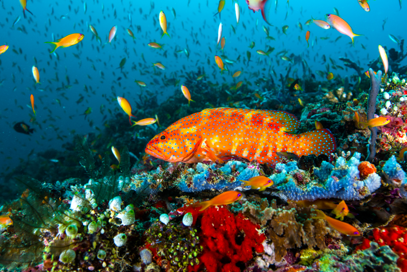 Variety of colorful fish and coral in the ocean