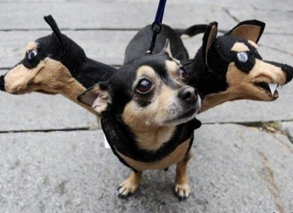 9 Puppies Who Are Totally Slaying Halloween  9 Puppies Who Are Totally Slaying Halloween  9 Puppies Who Are Totally Slaying Halloween  9 Puppies Who Are Totally Slaying Halloween