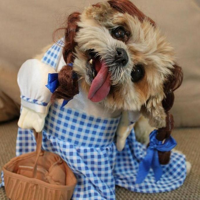 9 Puppies Who Are Totally Slaying Halloween  9 Puppies Who Are Totally Slaying Halloween