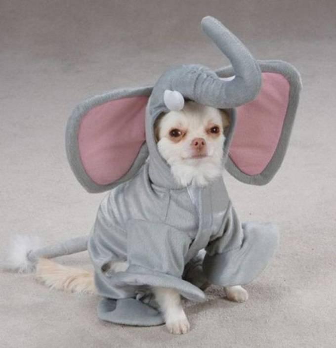 9 Puppies Who Are Totally Slaying Halloween